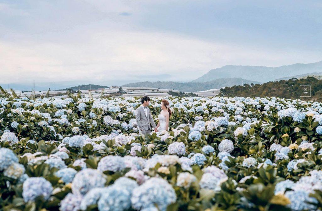 Những địa điểm chụp ảnh cưới đẹp tại Đà Lạt 12